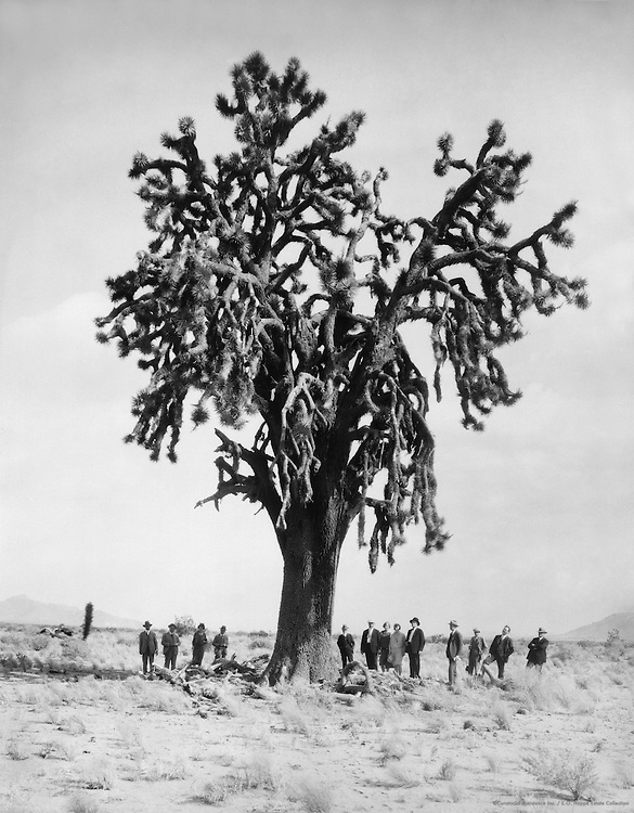 Joshua Tree, California, 1927