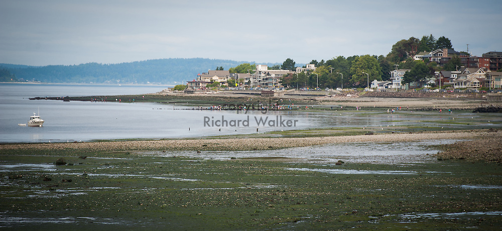 2013 July 22 - People explore along the shore of Alki Beach near Charles Richey Sr Viewpoint as seen from Me Kwa Mooks Park, Seattle, WA, during low tide. By Richard Walker