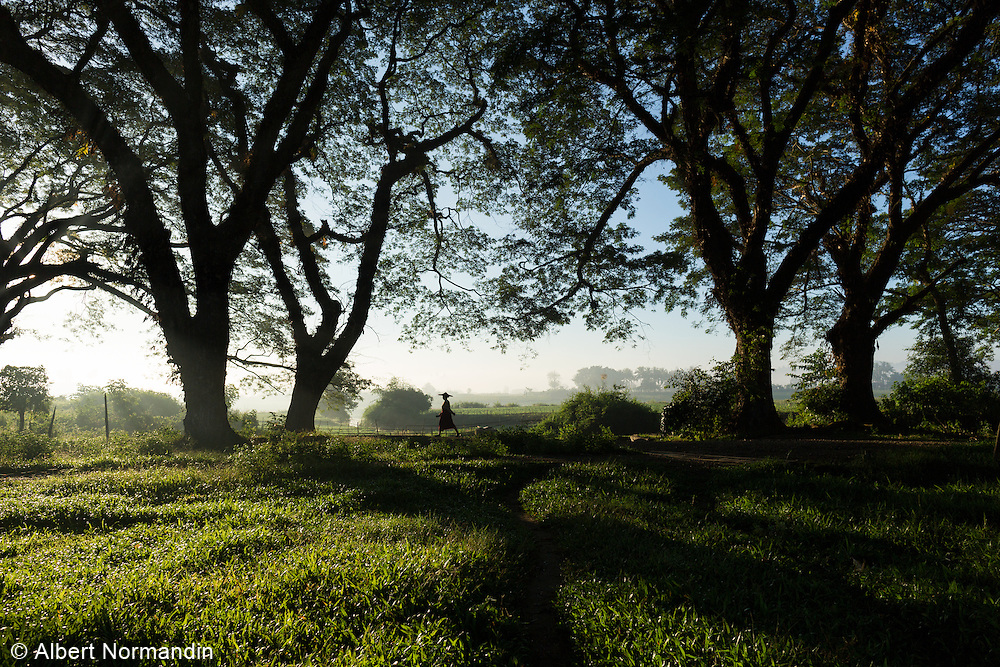 Woman in traditional hat walking with big trees and shadows, Thandwe
