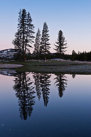 Reflection of trees in flooded Tuolumne Meadows, Yosemite national park, California