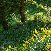 Heather Goodrich riding through the wildflowers on top of Teton Pass.