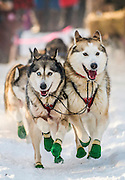 Dogsled Team during the 2012 Yukon Quest Start
