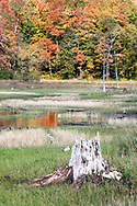 A tree stump and some Fall foliage along the shore of Lac Bourgeois at Gatineau Park in Chesea, Québec, Canada. Beaver activity frequently changes the water levels here depending on the year.