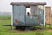 Nederland; Hamme; 7-1-2019Een geit; hobbygeit; staat in zijn hok; een oude afgedankte schaftkeet .Foto: Flip Franssen