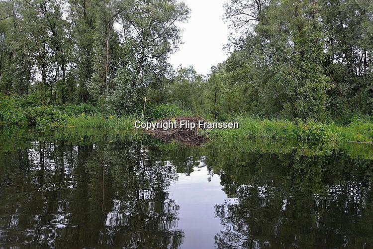 Nederland, Kekerdom, 21-5-2017Beversafari met kano in de Millingerwaard. Staatsbosbeheer gaat tochten per kano organiseren zodat belangstellenden de natuur in de Millengerwaard echt kunnen beleven. Doel is om bevers te spottenOm het water dat via Lobith binnenkomt goed te verdelen over het Pannerdensch Kanaal en de Waal én om de waterstand te laten dalen in tijden van hoog water, wordt de Millingerwaard verruimd voor een betere waterveiligheid.Er wordt een geulenpatroon gegraven bestaande uit kwelgeulen en een grote stroombaangeul.FOTO: FLIP FRANSSEN