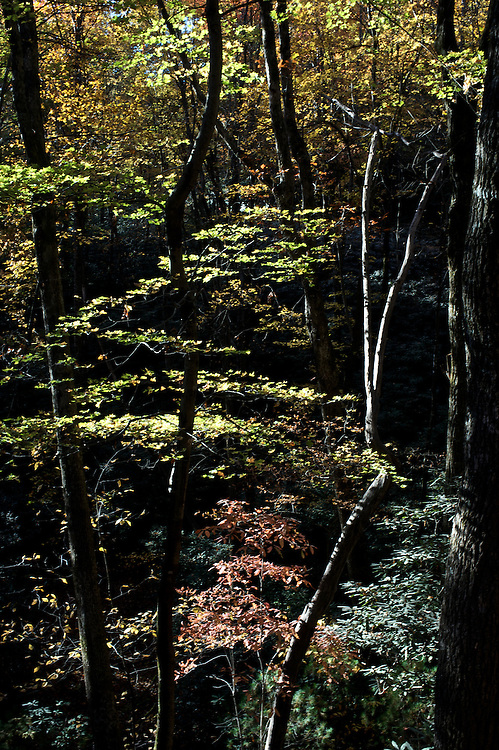 Fall colors emerge in the Pisgah National Forest of North Carolina