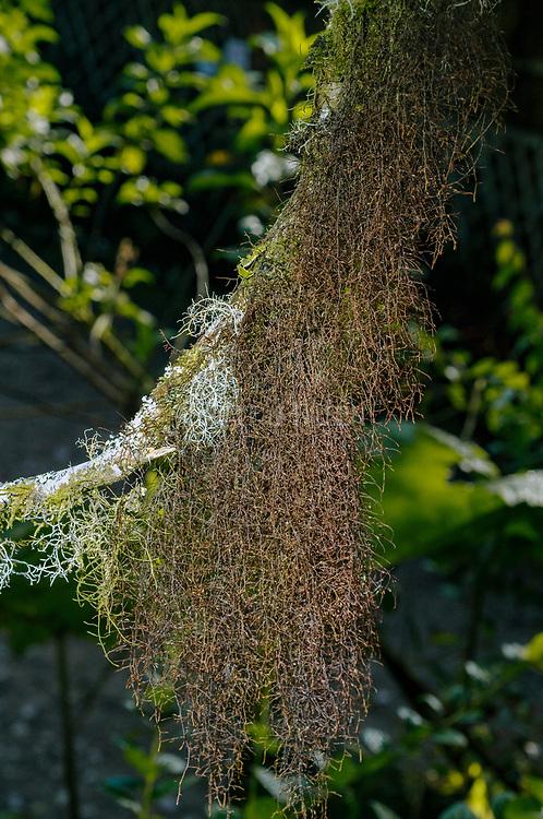 Unidentified lichens from Bellavista Cloud Forest, Ecuador.