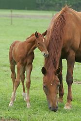 Foal<br /> Stal Smet - Kieldrecht 2004<br /> Photo© Dirk Caremans