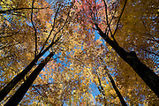Nature of Great Smokey Nationalpark, autumn atmosphere. Tennessee. United States of America.