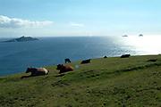 Bray Head on Valentia Island in South Kerry, Ireland.<br /> Photo: Don MacMonagle -macmonagle.com
