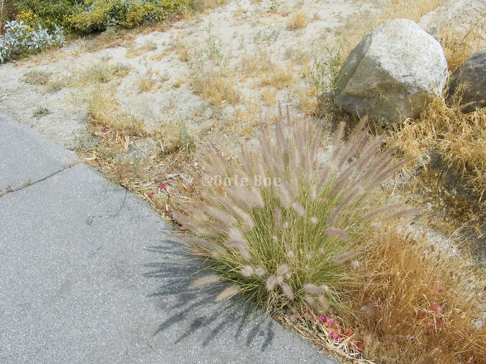 roadside scrub Palm Springs USA.