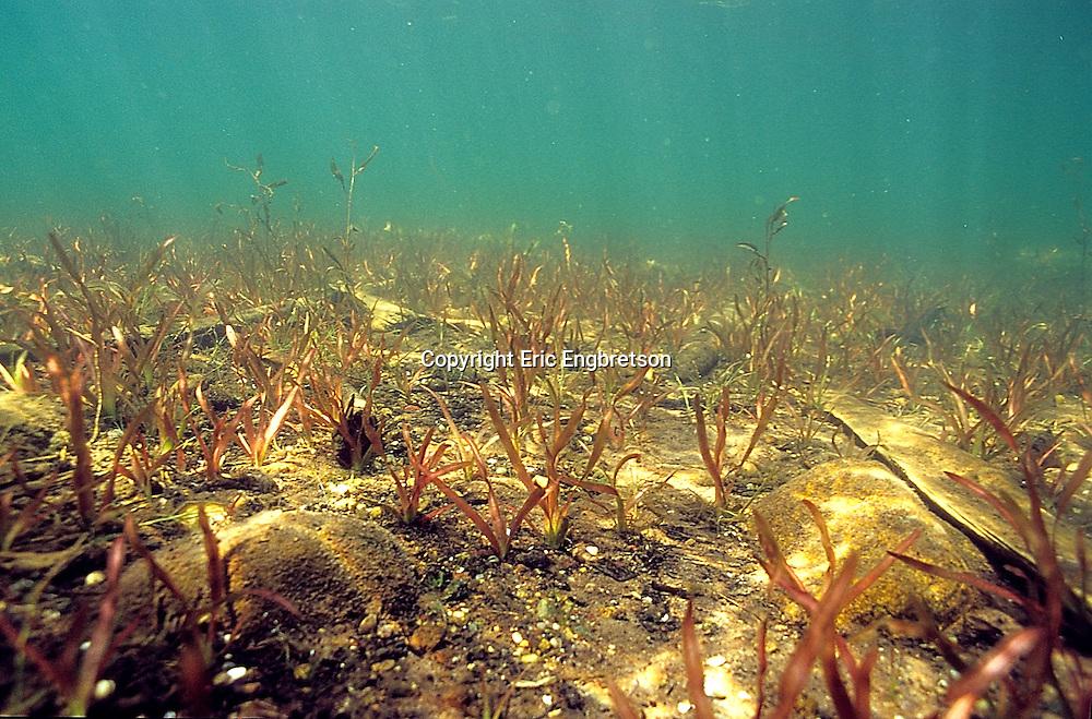 Underwater Scene-Lake Bottom<br /> <br /> ENGBRETSON UNDERWATER PHOTO