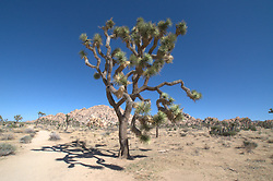 Boy Scout Trail, Joshua Tree National Park, California, US