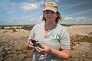 March 31, 2015,  Five years after the BP oil spill, National Wildlife Federation ,coastal scientist, Alisha Renfro, holds a BP tar ball up on East Grande Terre island, a barrier island in Plaquemines Parish that was hit hard by the BP oil spill in 2010.