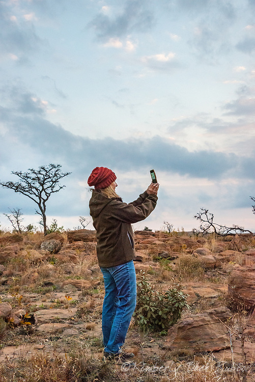50-year-old woman photographing sunset on a smart phone camera, standing on the savanna on safari at Welgevonden Game Reserve, Limpopo Province, South Africa.