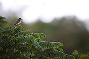 Nova Lima_MG, Brasil...Estacao Ecologica de Fechos em Nova Lima, Minas Gerais...The Ecological Station Mata dos Fechos, Minas Gerais...Foto: JOAO MARCOS ROSA / NITRO