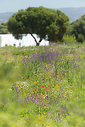 Field with wild flowers in Zahora, Spain