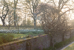 Looking over the Moat Walk towards the Orchard at Sissinghurst Castle Garden on a misty morning in spring