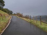 A rain washed country road in the hills near San Sebastian, Spain