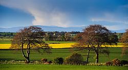 Landscape near the village of Nigg in the Cromarty Firth Scotland<br /> <br /> (c) Andrew Wilson   Edinburgh Elite media