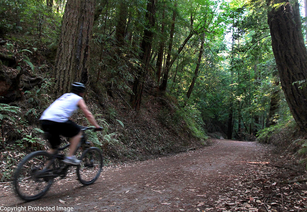A cyclist pedals along the Aptos Creek Fire Road in the Forest of Nisene Marks State Park.<br /> Photo by Shmuel Thaler <br /> shmuel_thaler@yahoo.com www.shmuelthaler.com