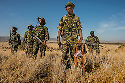 The Lewa Wildlife Conservancy serves as a refuge for endangered species. Yet Lewa's mission is not only to protect wildlife, but to act as a catalyst for conservation across northern Kenya and beyond.   Lewa is known for its 150 well-trained and highly motivated force of security personnel, who are deployed to incidents of poaching, cattle rustling, road banditry, robbery and any occurrences affecting peace and prosperity in the area.<br /> Lewa's  bloodhounds have helped to drastically reduce crime in the area.(Photo by Ami Vitale)