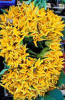 Italie - Toscane - Étal de marché - Fleurs de courgettes. // Italy, Tuscany, Courgette flowers at the market