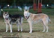 Buffy & Brutus - Dog Park Fun