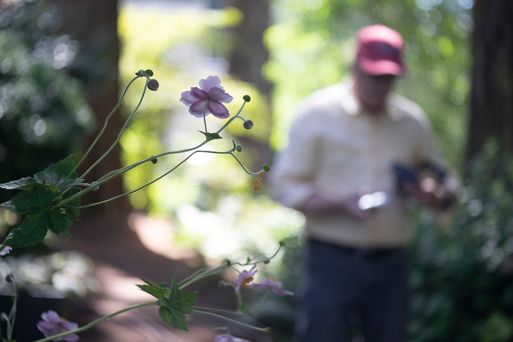 Photo by Randy L. Rasmussen, © 2018. Photographer and friend David Brunn shoots my garden with a vintage Graflex camera and instant film. Photo by Randy L. Rasmussen, ©2018