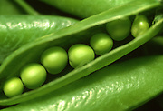 Close up selective focus photograph of some English Shelling Peas with one pod opened