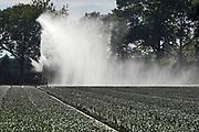 Nederland, Vredepeel, 19-8-2020Beregenen van een akker in de Peel. Foto: ANP/ Hollandse Hoogte/ Flip Franssen