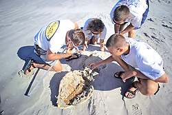 Studying Dead Black Sea Turtle