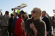 Fan holds seagull during the Brighton & Hove Albion Football Club Promotion Parade at Brighton Seafront, Brighton, East Sussex. United Kingdom on 14 May 2017. Photo by Ellie Hoad.