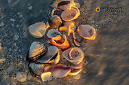 Seashells on Sanibel Island, Florida, USA
