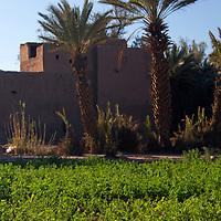 Africa, Morocco, Skoura. Kasbah in oasis near Skoura.