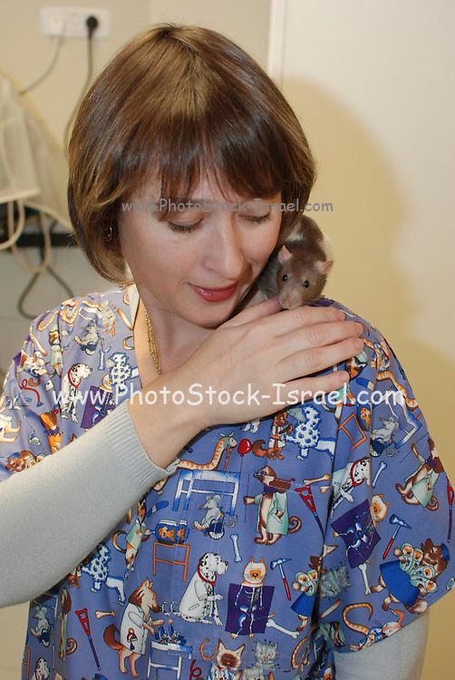 Vet's aid plays with her pet rat
