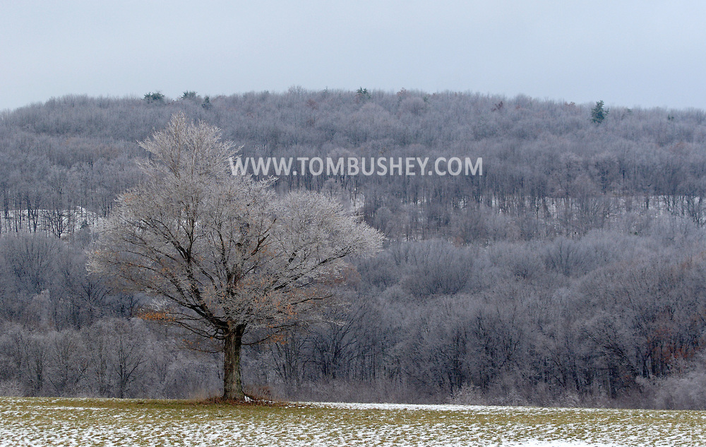 Otisville , NY - An oak tree in a field and trees on the hills in the background are covered in ice after a storm on Dec. 11, 2007.