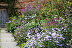 The Purple Border at Sissinghurst Castle Garden with Aster × frikartii 'Wunder von Stäfa' AGM in the foreground