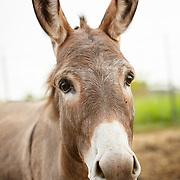 20201203 Joy Donkey