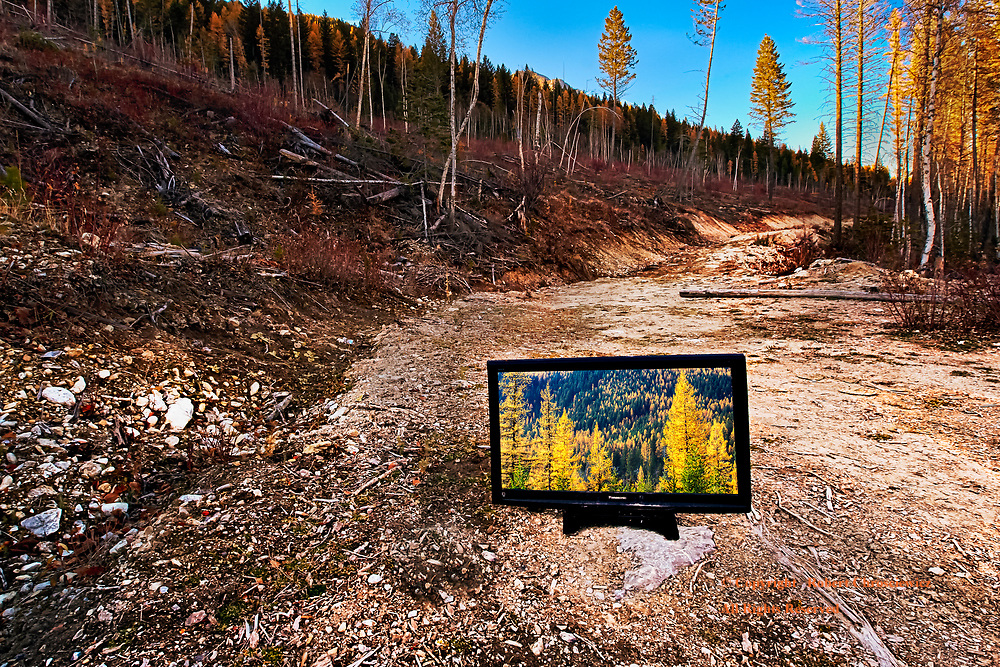 Ironic Illusions: A misplaced TV shows the illusions of a pristine forest before the clear-cut Kootenay River forest, British Columbia Canada.