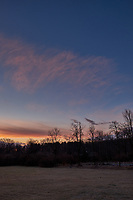 Winter Backyard Dawn Sky in New Jersey. Image 5 of 8 taken with a Fuji X-T1 camera and 16 mm f/1.4 lens (ISO 200, 16 mm, f/8, 1/60 sec). Raw images processed with Capture One Pro and the composite generated using AutoPano Giga Pro.