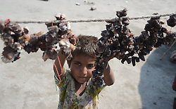 September 5, 2017 - Lahore, Punjab, Pakistan - A gypsy family hang strips of salted meat collected from different places to preserve for a longer time to use during the Muslims Eid al-Adha or Festival of Sacrifice. (Credit Image: © Rana Sajid Hussain/Pacific Press via ZUMA Wire)