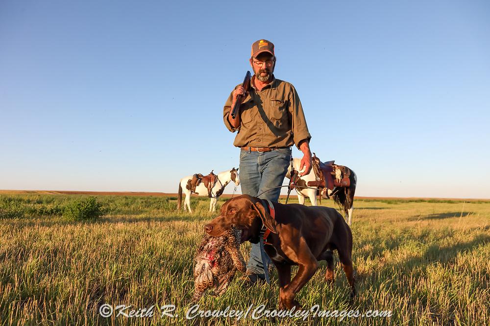 John Zeman's, German shorthair Louie, retrieves a sharptail during a Montana prairie grouse hunt.