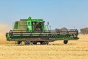 combine harvester harvesting golden barley <br /> <br /> Editions:- Open Edition Print / Stock Image