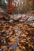 Cave Creek with Fallen Arizona Sycamore Leaves, Cave Creek Canyon, Chiricahua Wilderness, Coronado National Forest, Cochise County, Arizona