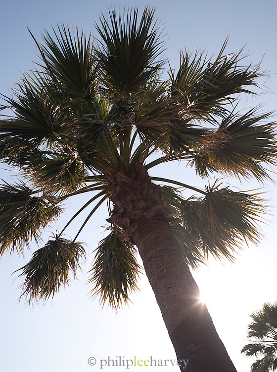 Palm trees on the promenade in Bandol, France