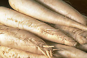 Close up selective focus photograph of some Daikon also known as winter radish, originally native to East Asia