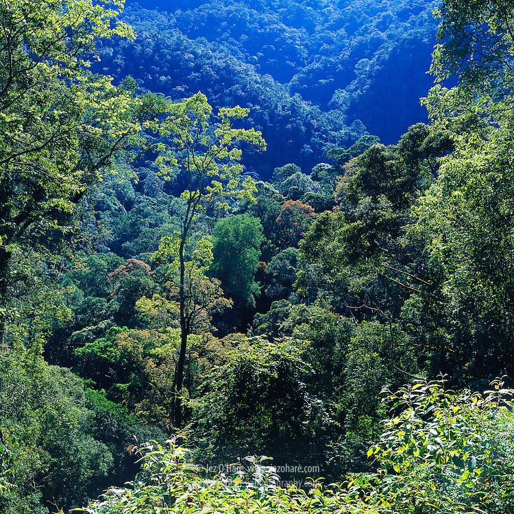 Mount Leuser National Park, Nanggroe Aceh Darussalam, Sumatra, Indonesia.