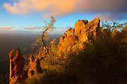The golden light of sunset highlights the harsh environment near the summit of the High Peaks in Pinnacles National Park, California, illustrated in part by a radically-curved tree. The High Peaks, some of which are nearly 2,500 feet (750 meters) tall, are partial remnants of the ancient Pinnacles volcano, shifted 190 miles north of its original location due to movement of the San Andreas Fault.