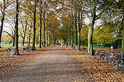 Herfstwandeling op Landgoed Clingendael, Den Haag - Autumn in Clingendael estate, The Hague, Netherlands.